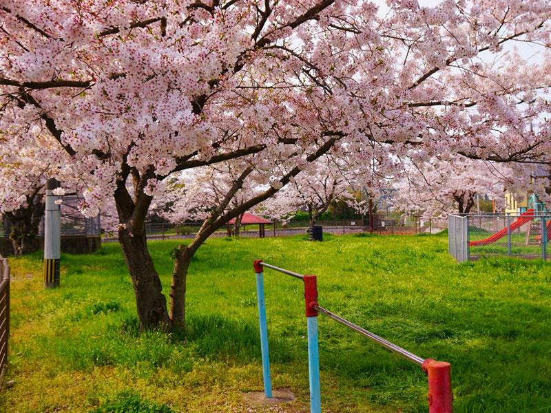 西新の保育園 にしじん森の子保育園|4月 入園